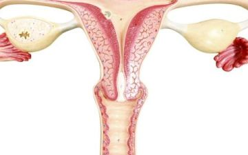 Лейомиома матки — что это такое и какие формы бывают?