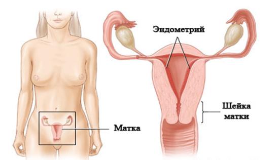 Структурные изменения эндометрия