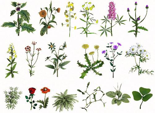 Травы и растения